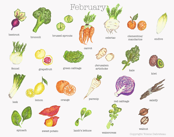 February fruit and vegetable calendar - Illustration: Yolene Dabreteau